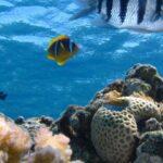 marineecosys_Pixabay-CC0 Public Domain